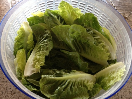 washed cos lettuce