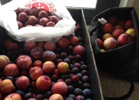 kitchen full of plums