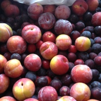 What to do with a glut of...plums