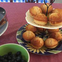 Citrus Olive Oil Muffins