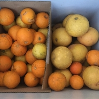 What to do with a glut of...citrus